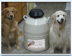 Picture: Two dogs sit on either side of a storage vat of genetic material.
