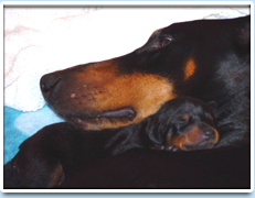 Image: Picture of the Raisin Spiniello litter - a Mom and her pup (02/2006).
