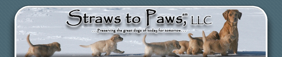 Straws to Paws, LLC Masthead Image